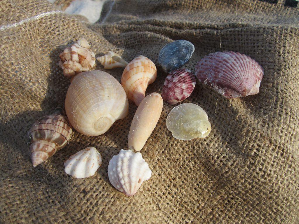 Cueillette de coquillages à Sanibel Island