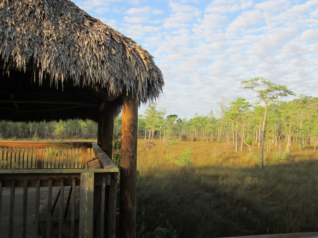 Diversité des paysages dans les Everglades
