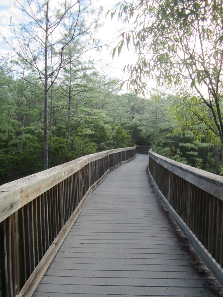 Pont suspendu pour se balader dans les Everglades