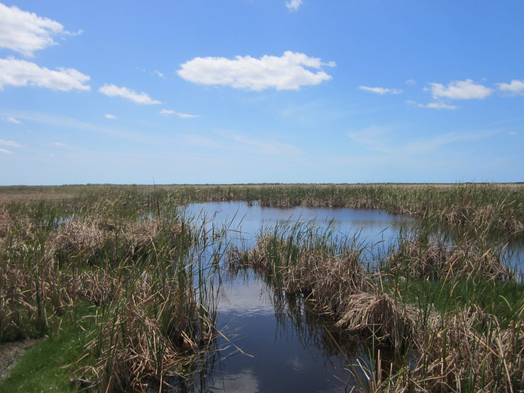 Zone humide, marécage dans les Everglades