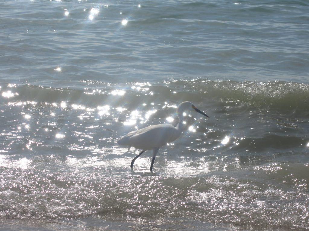 Oiseau dans le Golfe du Mexique